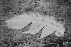 """Feather"" © Lisa Blair"