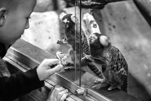 Whispers - Marmosets
