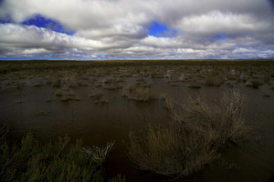 High altitude marshes / A marsh at 1,500 m on the Great Karoo plateau, Winter 2015