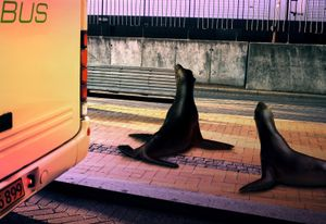 "Sea Lions, From The Series ""Sacrifice""@ DongwookLee, 2010"