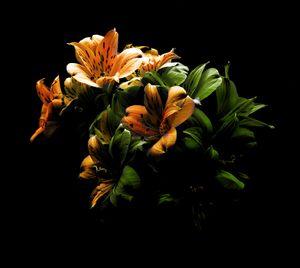 Floral 05