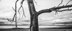 dead tree, marina.