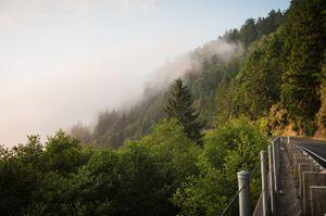 Redwood National Forest, Oregon. © Kate Vredevoogd