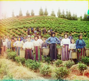 """Group of Workers Harvesting Tea near Chavka, Caucasus, between 1905 and 1915 © Sergei Mikhailovich Prokudin-Gorskii, from the book """"Nostalgia"""". Images courtesy US Library of Congress and Gestalten publishers, Berlin."""
