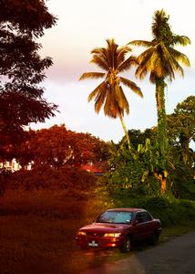 Borneo Heat / #2