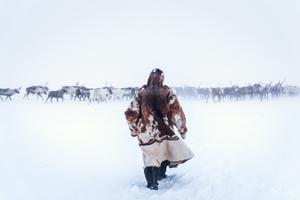 Reindeer Herder