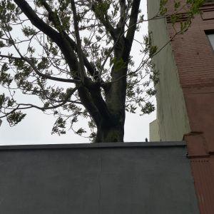 Tree & Wall, 109th Street