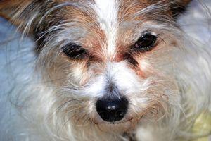 Dog, Glen Echo, Maryland