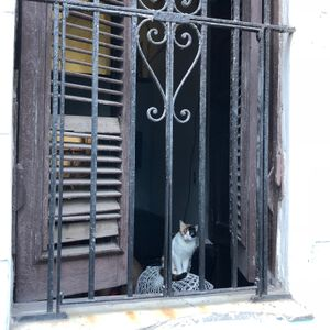 Cat in an Old Havana Window