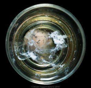 Water Egg_ © 2011 Alison Taggart-Barone