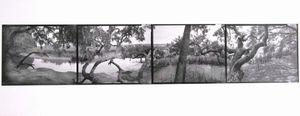 Oxbow Creek, Spring Island, SC