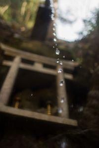 Kyoto Drop
