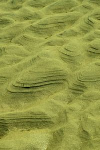 Sand Agriculture