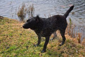 Dog Out Of Lake