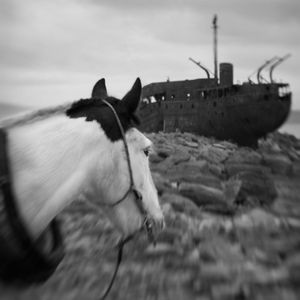 Captain Morgan and the Wreck© Anne Berry
