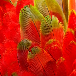 Are Ararauna red and green