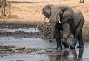 Young Elephant Cools Off