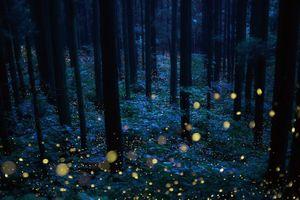 Deep forest fairies'