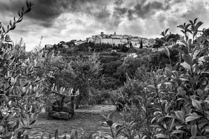 Montepulciano through olive groves