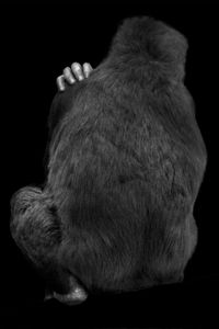 Animal (2). 2007.
