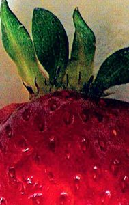 Strawberry #1