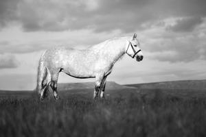 The Beauty of the Horse