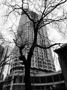 Vancouver Building and Tree