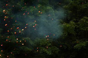 Imago woods - Dryad