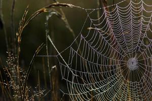 Web Anchor
