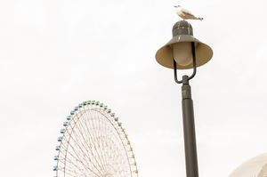 Seagull and Wheel