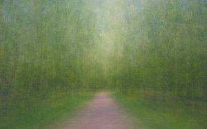 Path 11, 2011