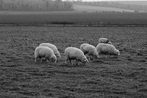 Herd behavior