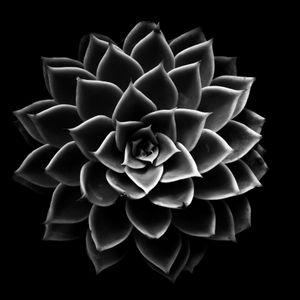 Succulent Series #19