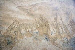 Bleak Trees