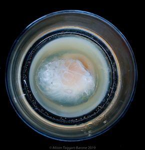 Water Egg_ ©2011 Alison Taggart-Barone