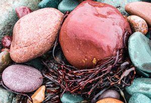 Rocks and Seaweed in the Rain