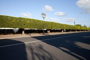Palace road, Rabat