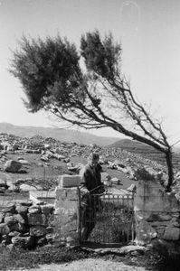 The Stone land Harvester               Volax - isl. Tinos - Hellas