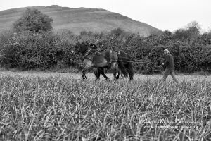 Traditional Ploughing