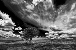 Lonely Tree in the Plain