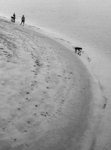 El perro y el mar.