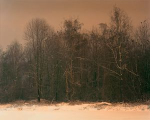 Là, où vivent les corbeaux. There, where the crows live. © David Favrod