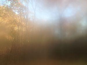 Nov 10  8:06am