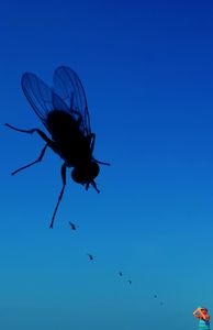 Mobile Fly