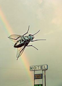 Motel Fly