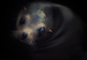 Sealion Portrait