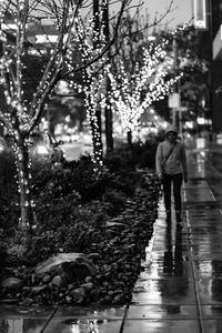 Rainy Tree Lights