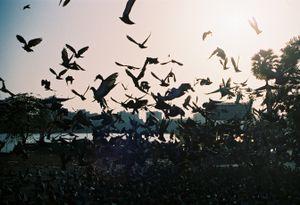 Birds in Unlocked Cage