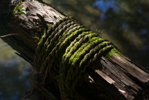 Mossy Tree Support