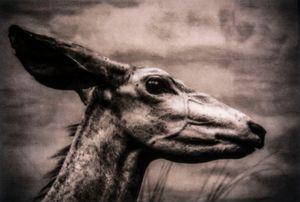 Epitaphs / Silent Stories/ Tragelaphus Imberbis